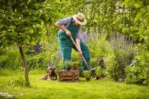 41765534 - man with straw hat working in the garden