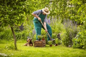 41765534 - man with straw hat working in the garden
