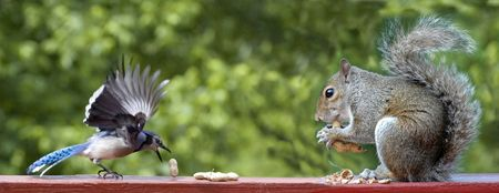 7159637 - bird and squirrel