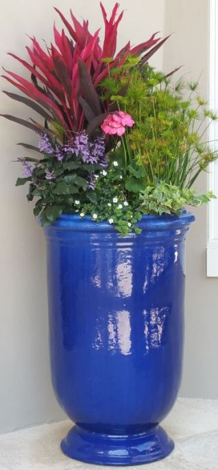blue urn,pd4