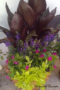 perwinkle, angelonia,calla,signed